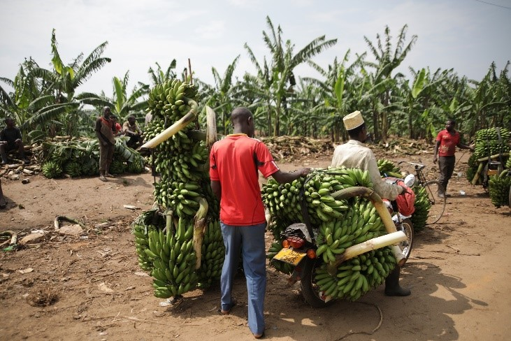 Transportation of food in Kenya
