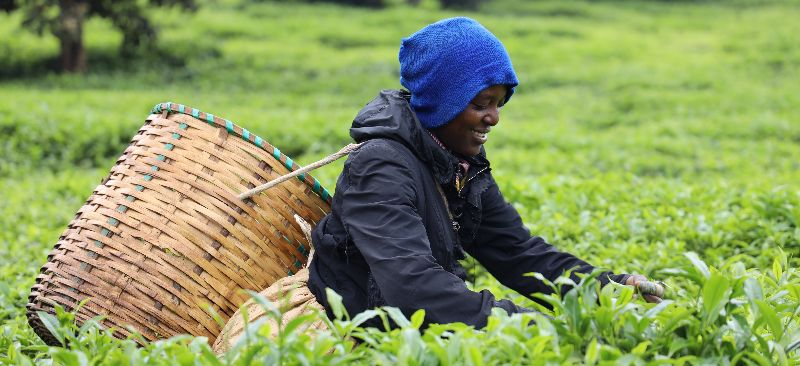 Impact of the COVID-19 pandemic on farmers-Kenya report